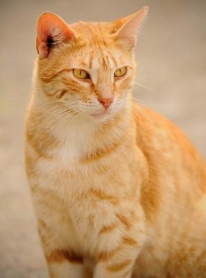 Warrior Cat Roleplay Blog Thunderclan Cats Cinema Tv Fantasy Fiction
